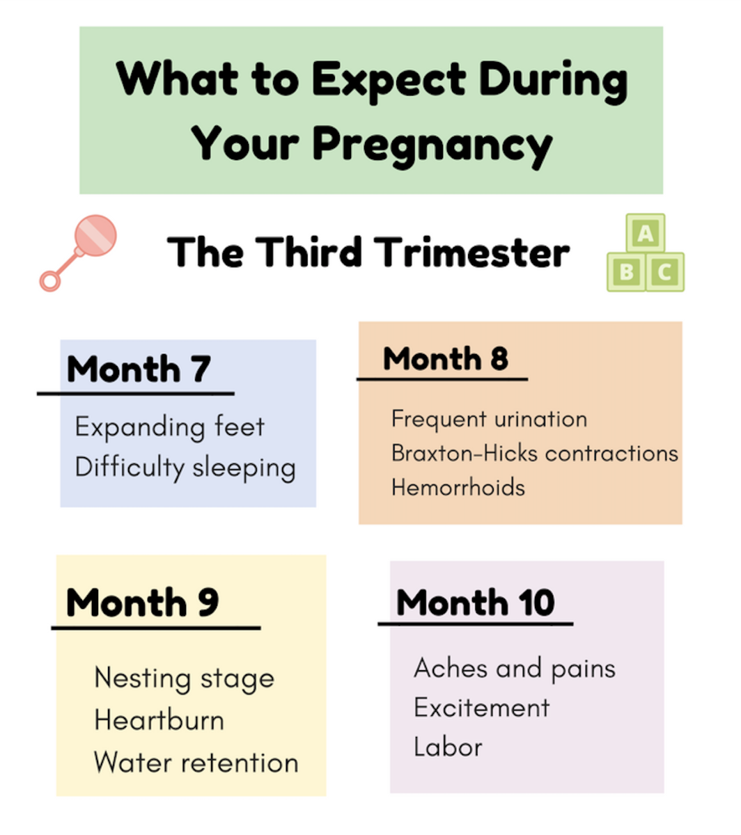 What to Expect During Your Pregnancy During the Third Trimester