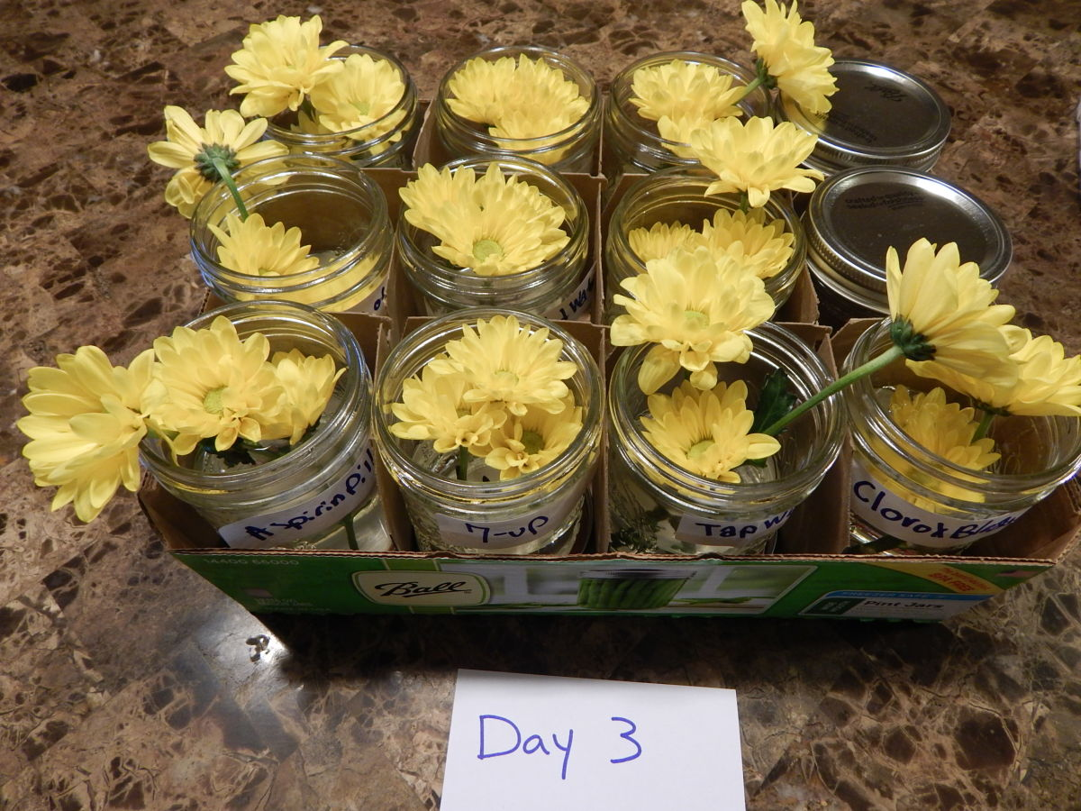 Tip #1: Use pint jars and the box they came in to easily keep move and keep track of your experiment.