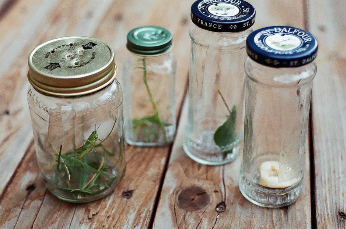 """Making a """"Bug Bottle"""" is the ideal way to learn about bugs: their diets, habitats, and behavior."""