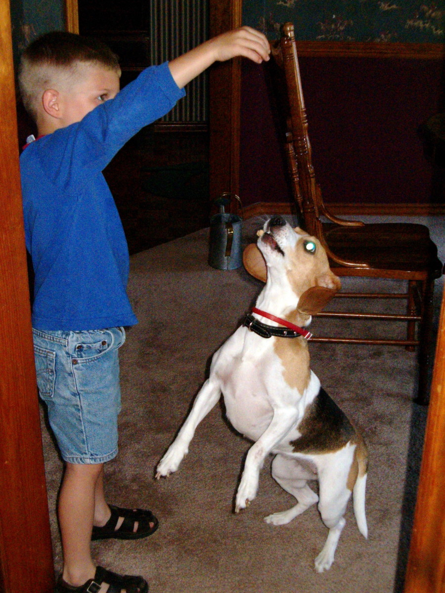 My youngest son and our much younger beagle.