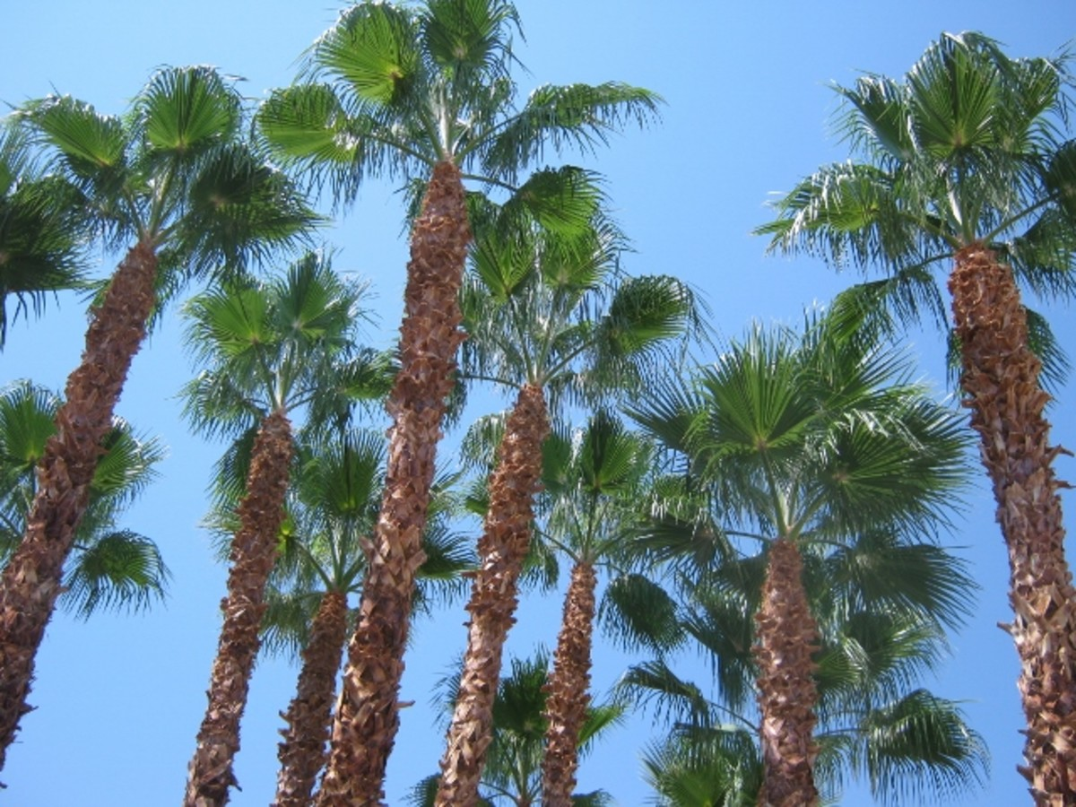 A nicer climate here in Las Vegas, but you have to put up with more crime and the anything goes mentality along with people who are working odd shifts, are stressed out and people who have different values - or lack of values.