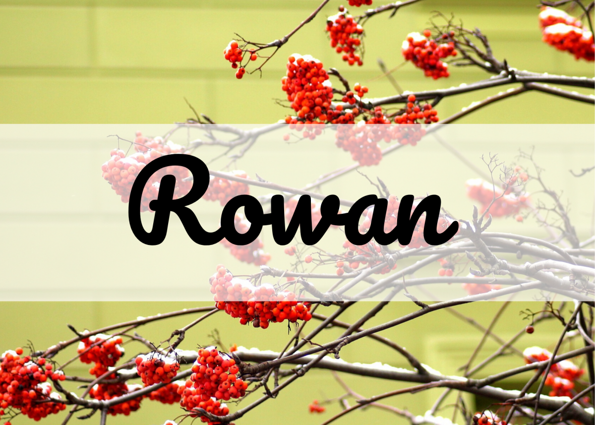 The hardy rowan tree is associated with the month of February, making Rowan a fitting name.