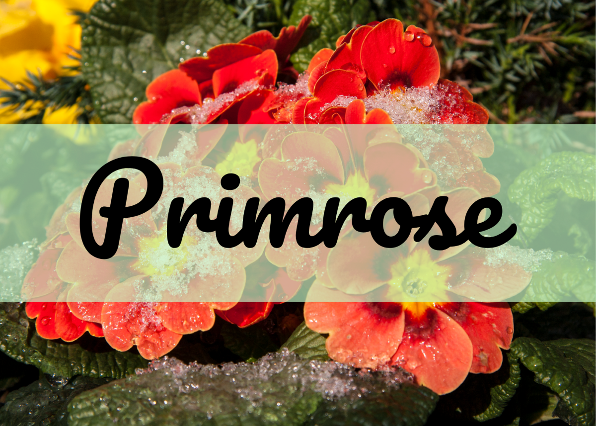 Primrose is an unusual alternative to the name Rose.