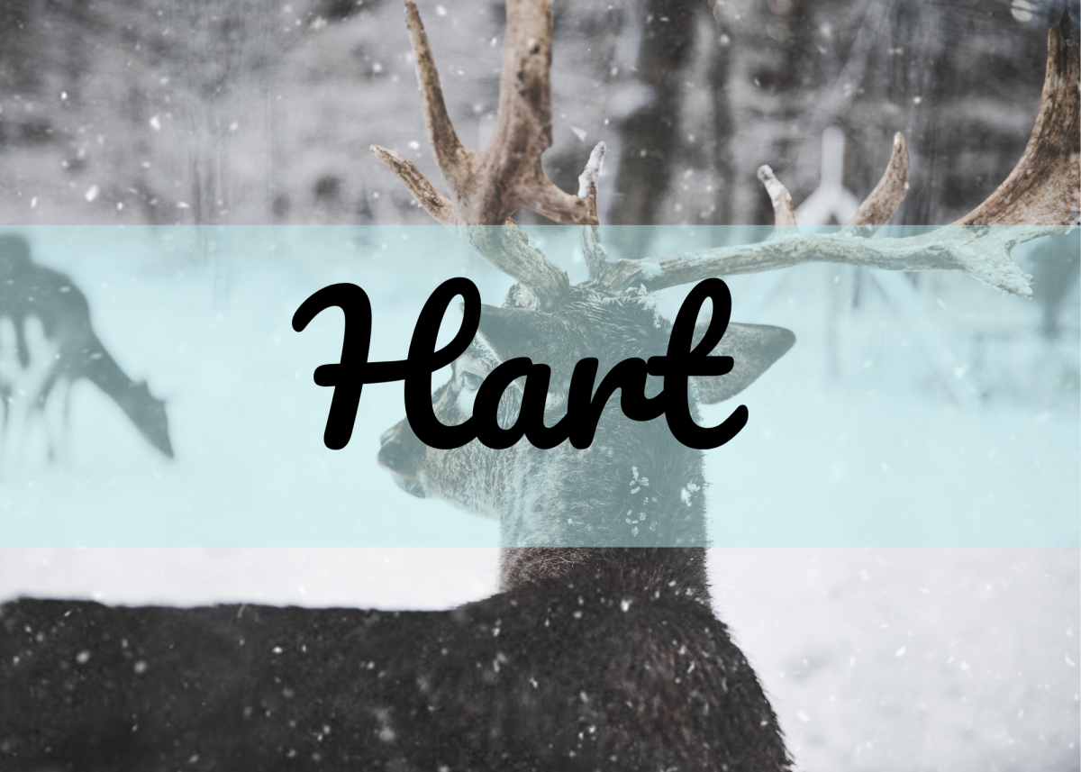 """Hart sounds like the word """"heart,"""" but this particular spelling references a stag."""