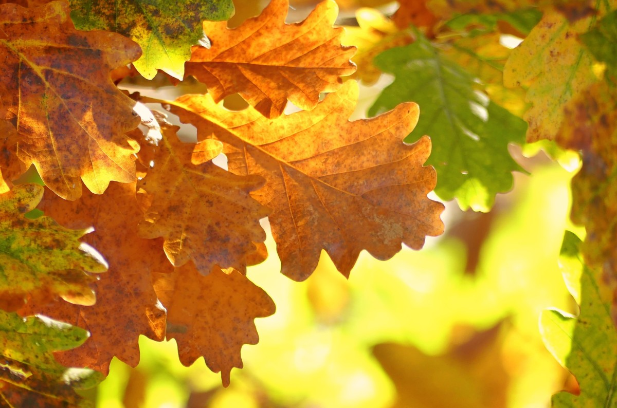 Beautiful oak leaves have inspired baby names in recent years.