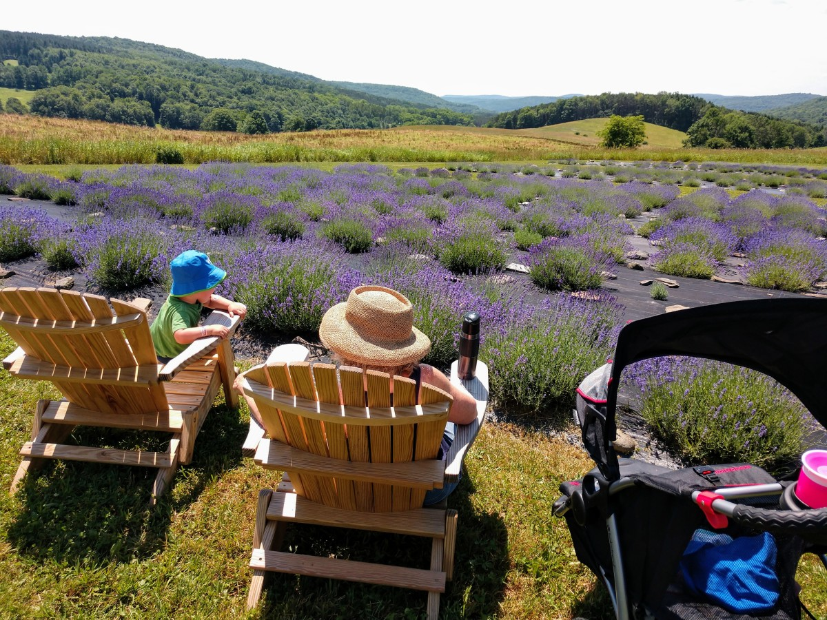 My mother in law was happy to come with us for a walk around the lavender farm