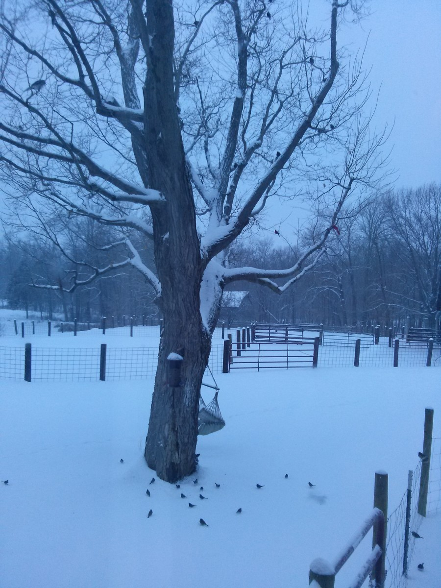 Even on the darkest, coldest, days of winter, my bird feeder is a hopping place.