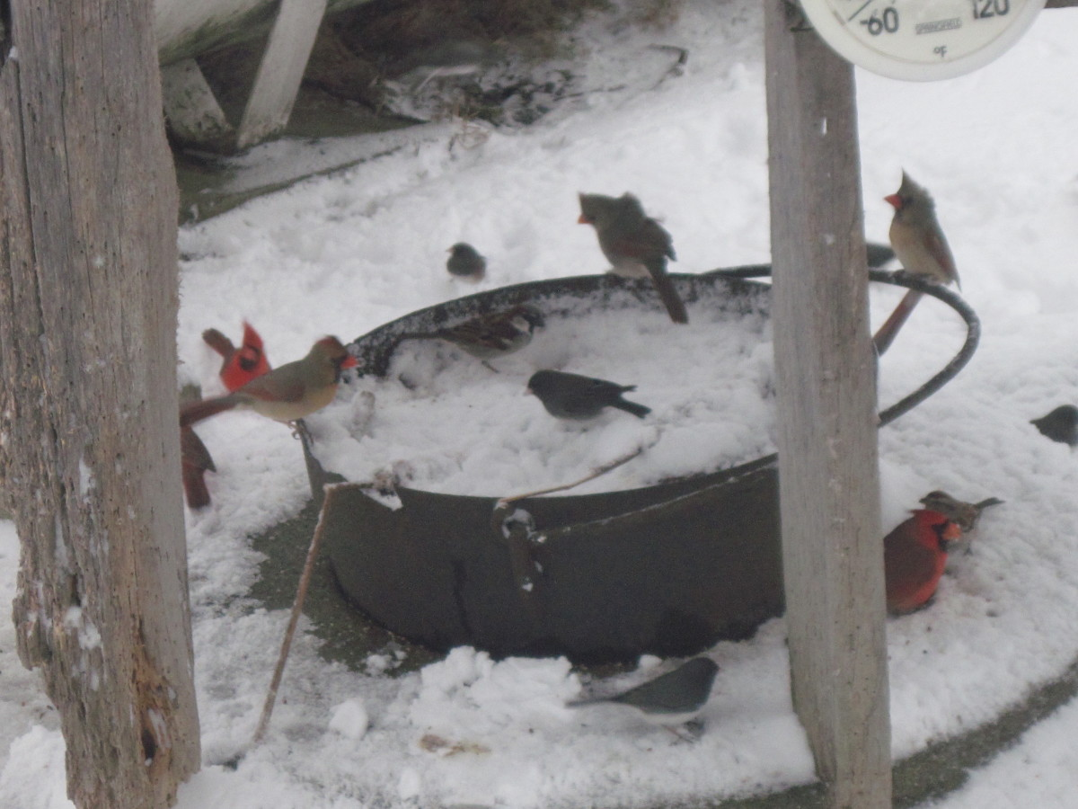 Feed the birds to liven up your winter.