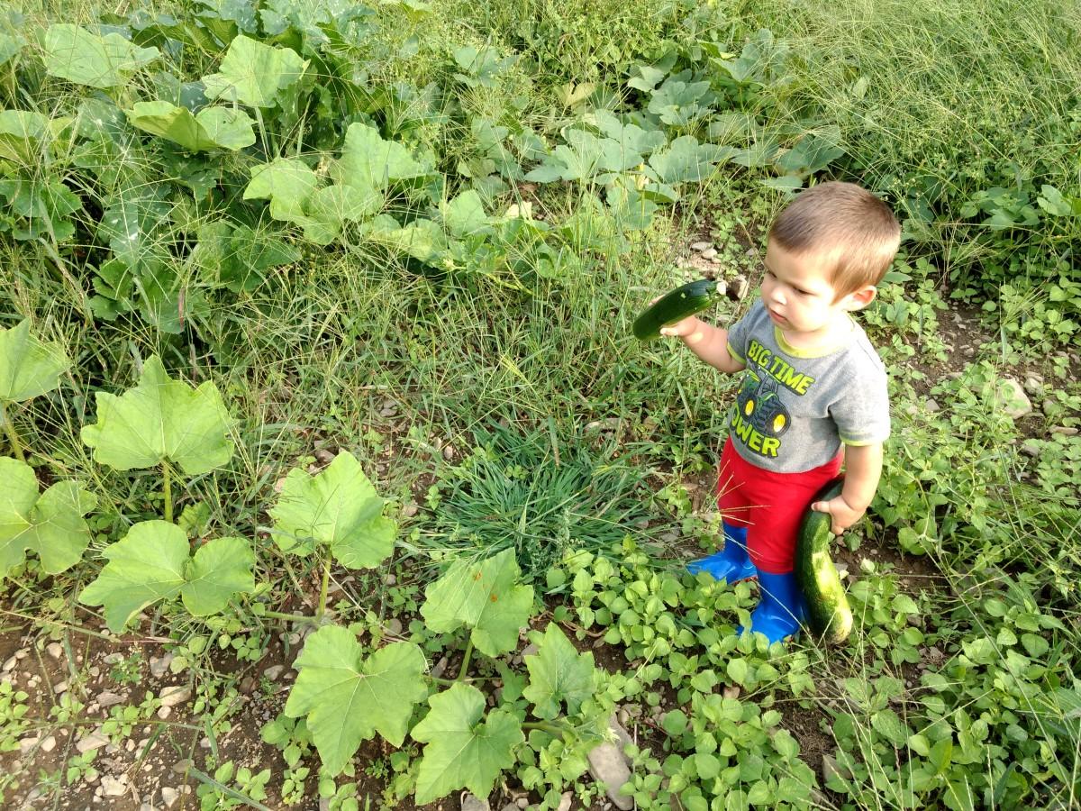 Fresh vegetables from the garden.
