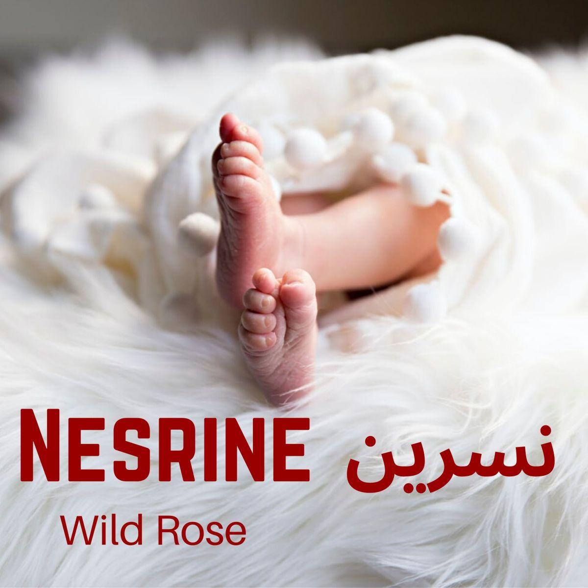 Nesrine is a beautiful girl's name in Arabic.