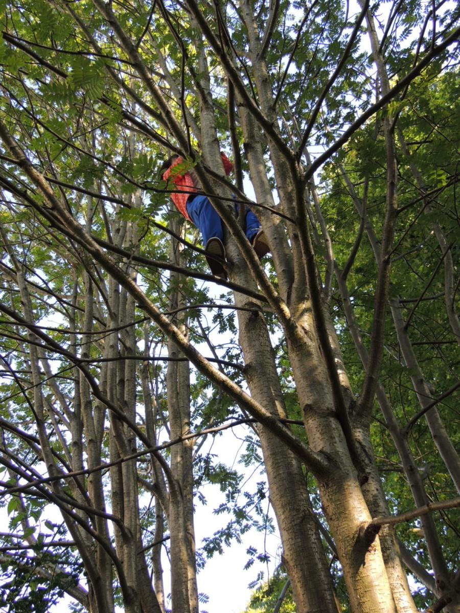 Good climbers…