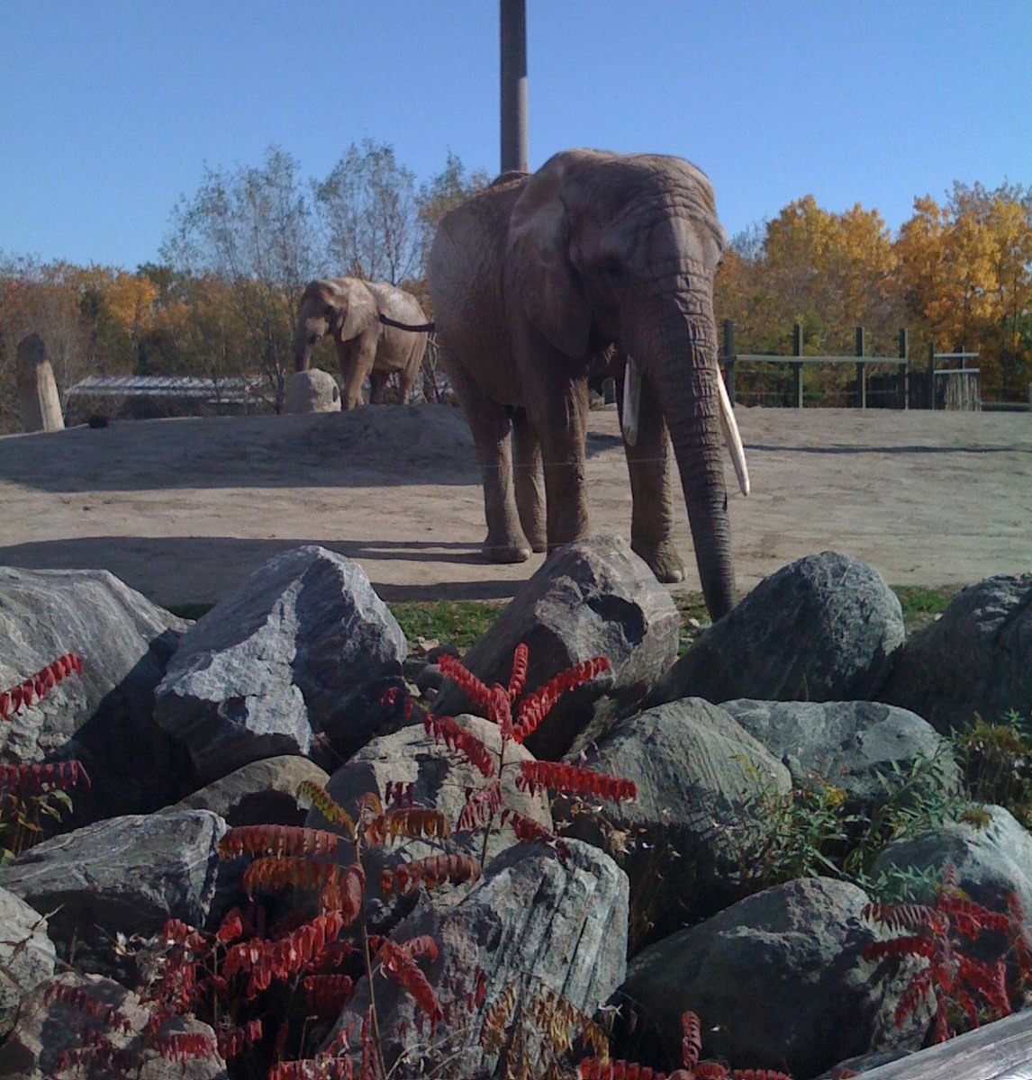 Autumn is a wonderful time to visit the zoo.