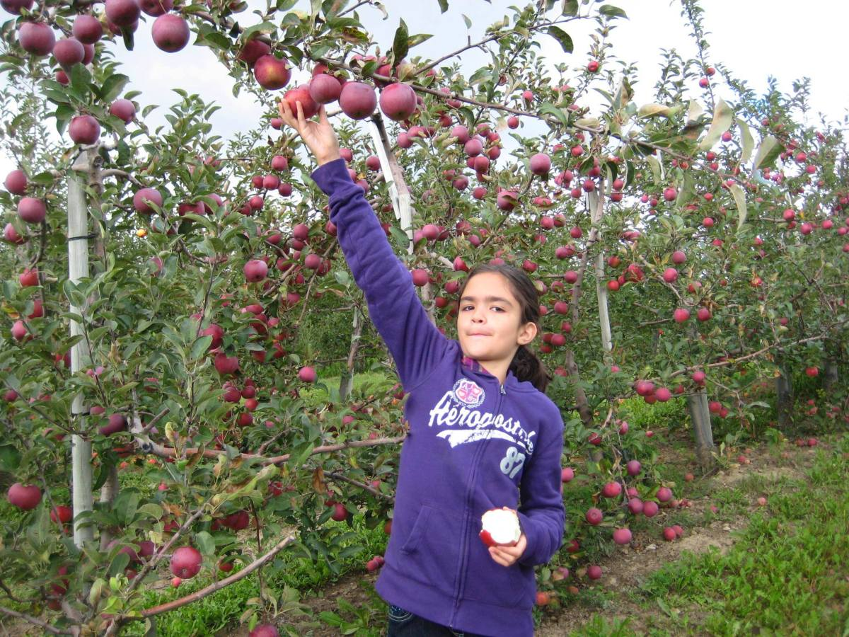 Kids of all ages love apple picking.