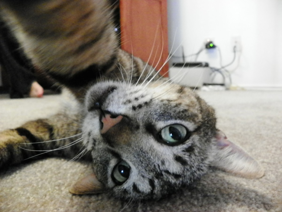 Even the cat has awkward selfies.  Where's yours, Embarrassing Mom?