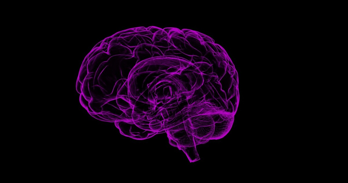 the brain develops from back to front
