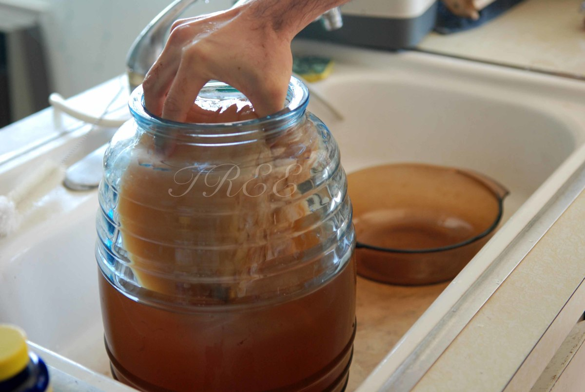 Put the scoby into your tea-and-sugar mixture.