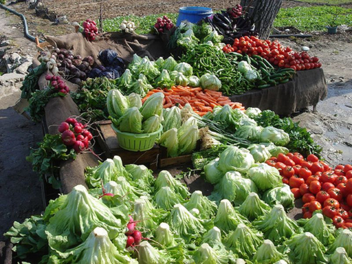 Greens, tomatoes, carrots, and other veggies.