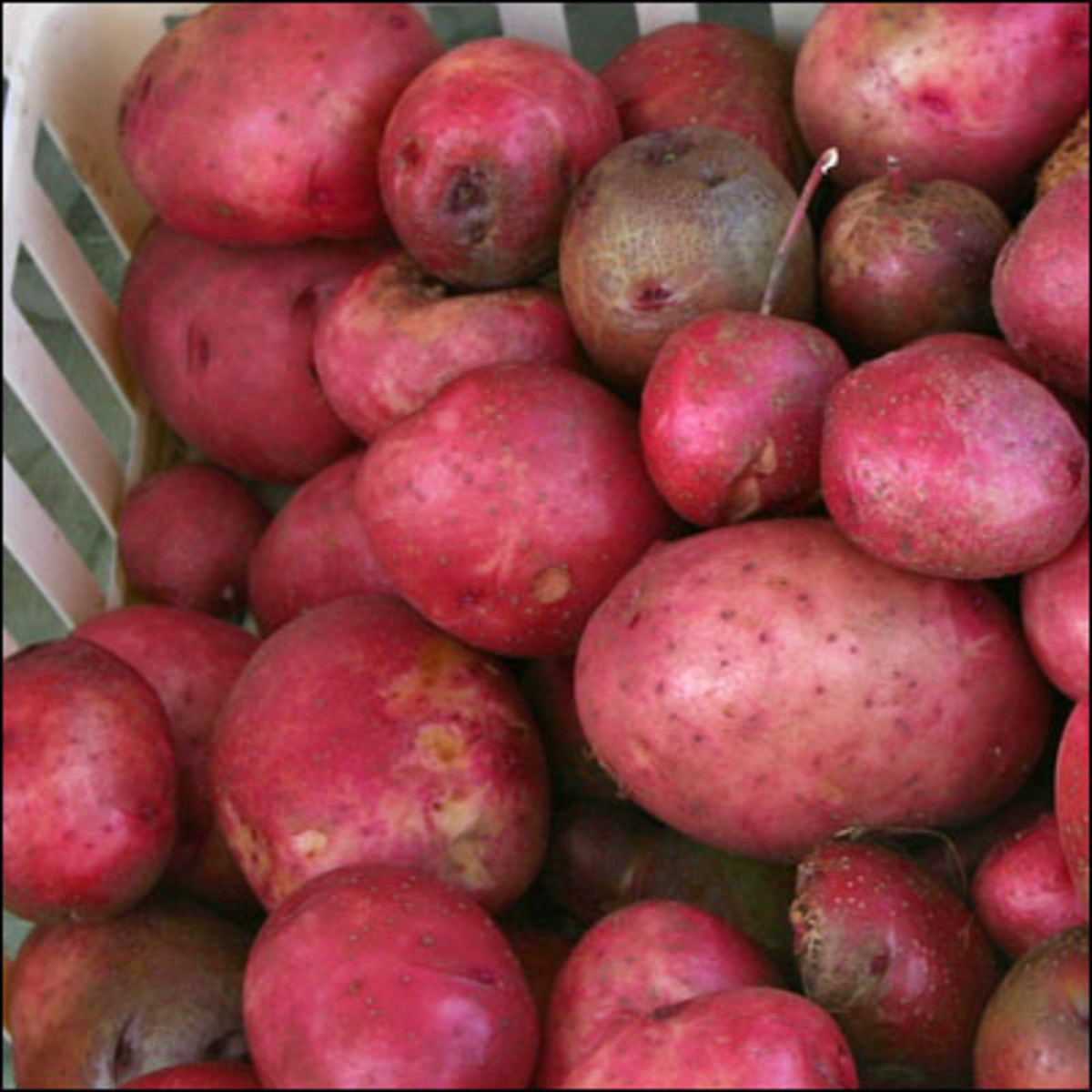 A pile of red potatoes.