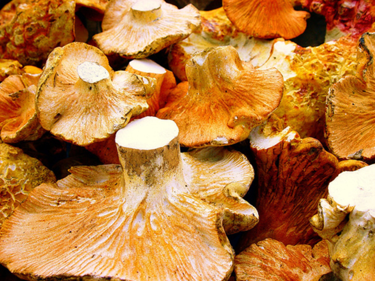 Delicious mushrooms.