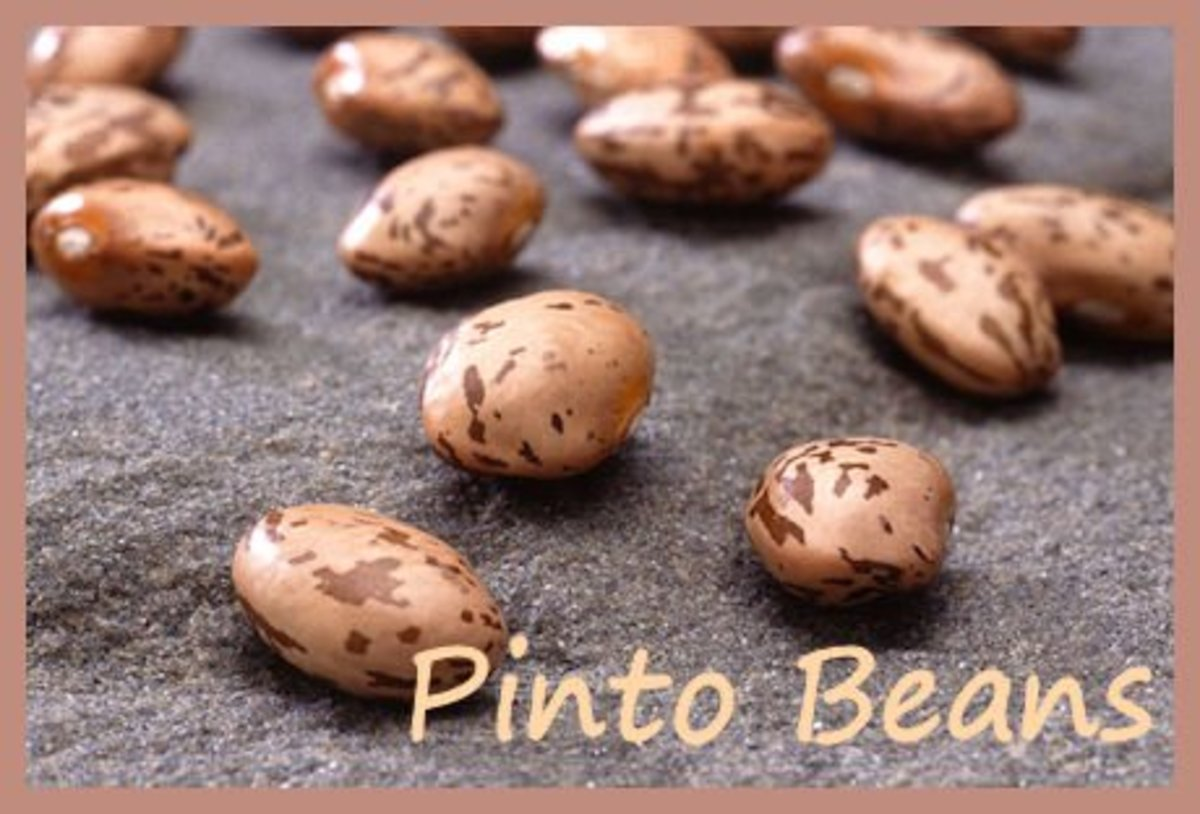 Dried Pinto beans make a wonderful Texas soup with salt pork and onions and garlic cooked up in a crock pot.