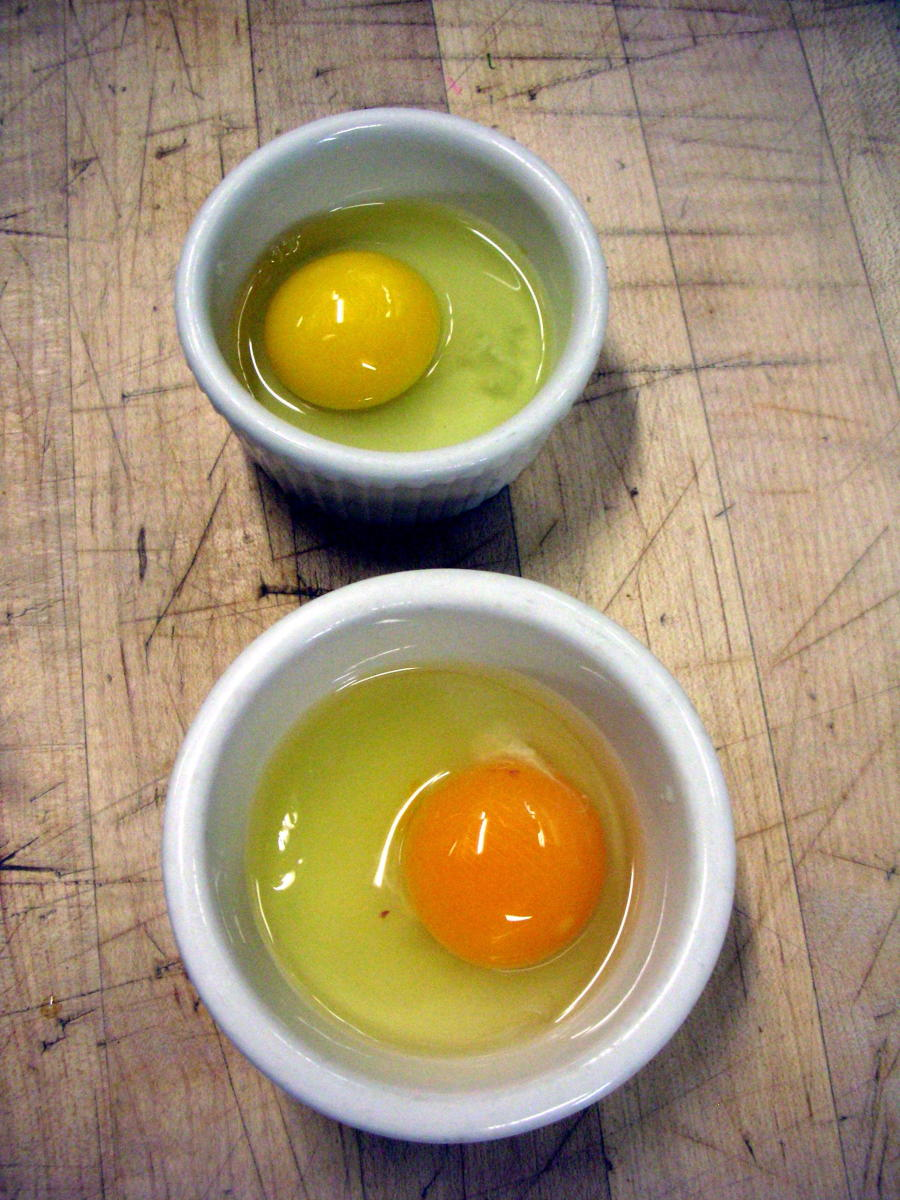 It is easy to see the huge color difference between a store bought production egg, and a fresh free range egg-- look for brown or pastel blue colored shells.