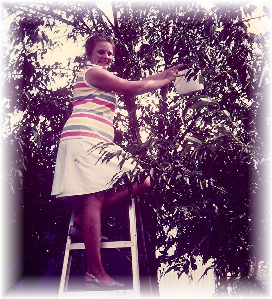 There I am picking choke cherries from our tree in the front yard.