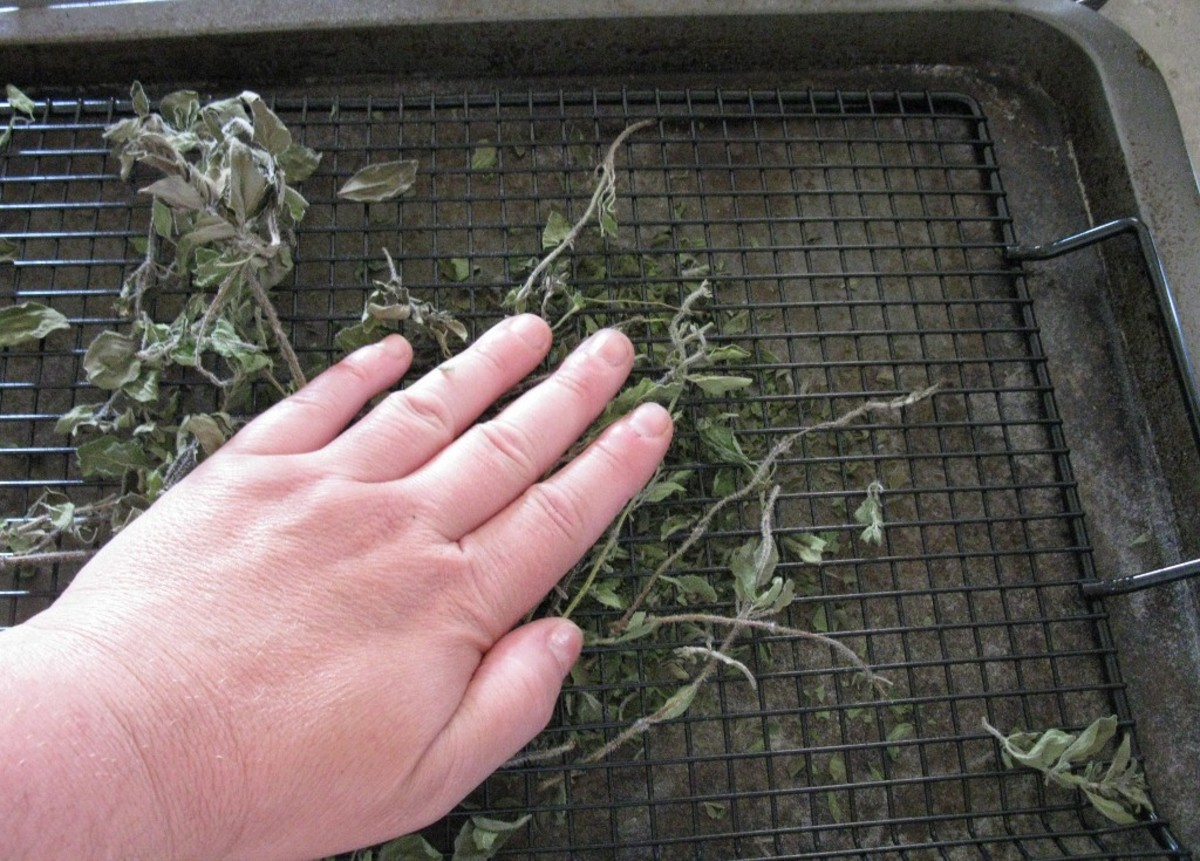 Rubbing the dried herbs to remove stems