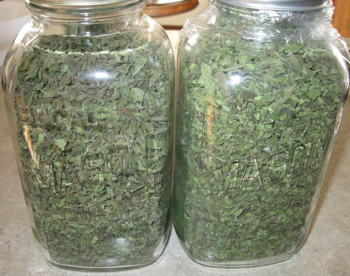 Yield was actually four 1.5L jars of dried oregano.  See how green the leaves are.