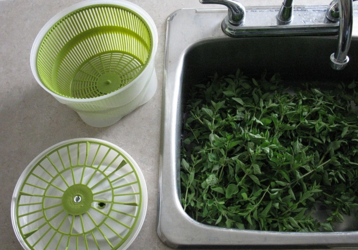 Sink full of green oregano soaking before washing and spinning dry in the salad spinner