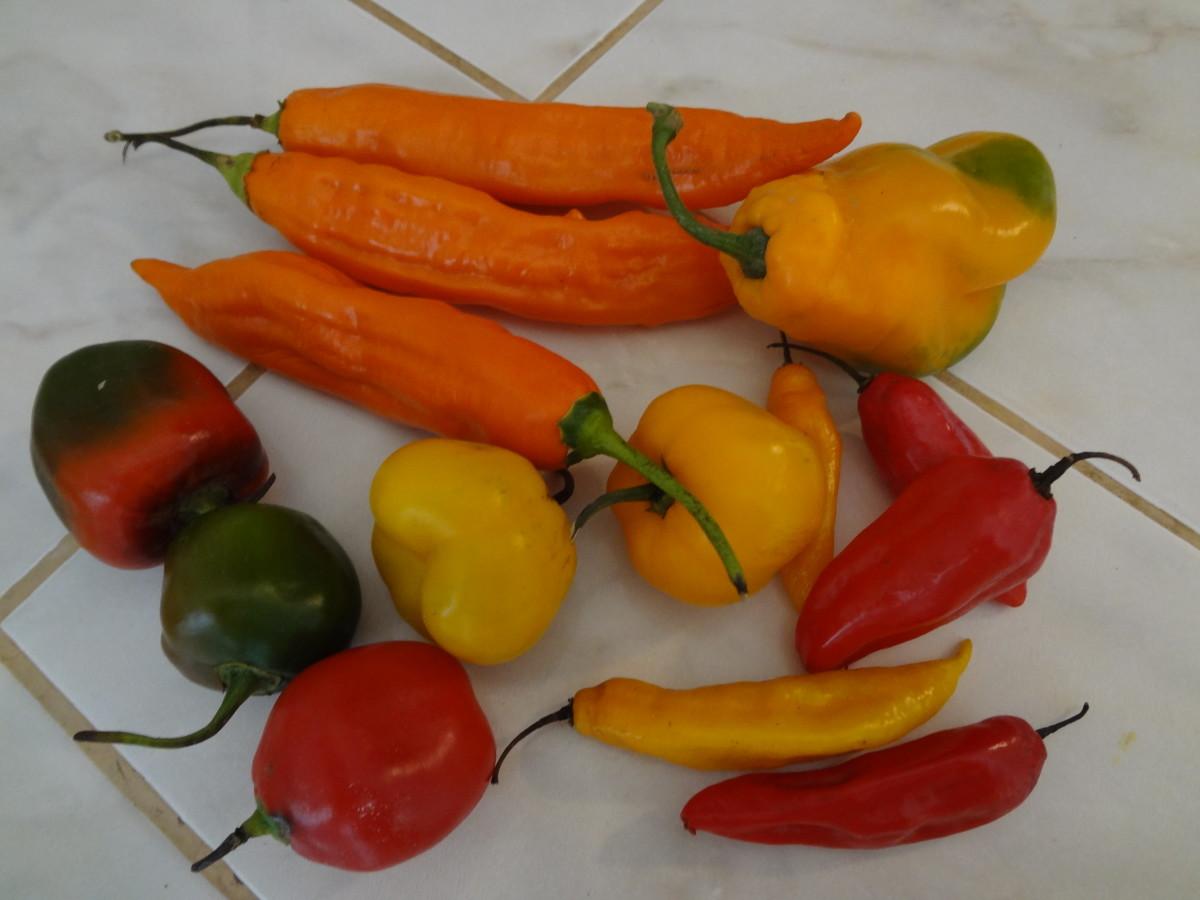 Peruvian Aji Chiles
