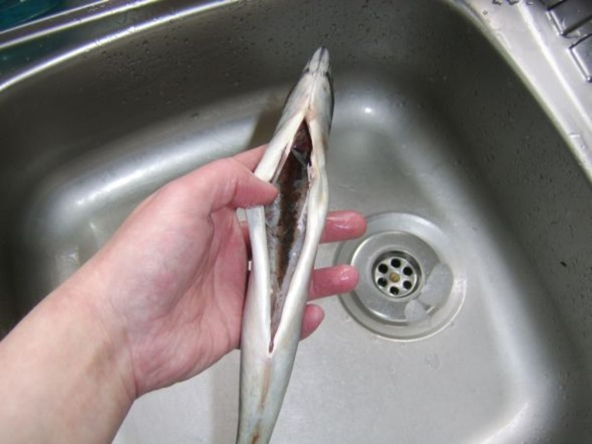 Freshly gutted mackerel