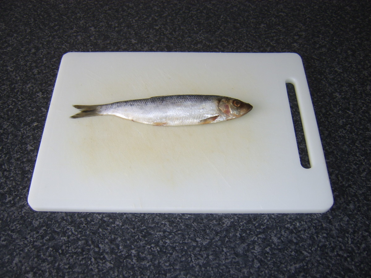 Small herring ready to be prepared kipper style