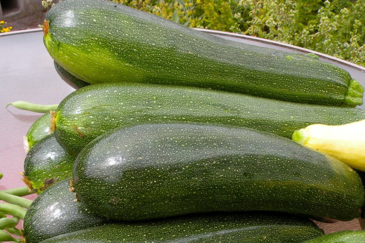 Need new ways to use zucchini?