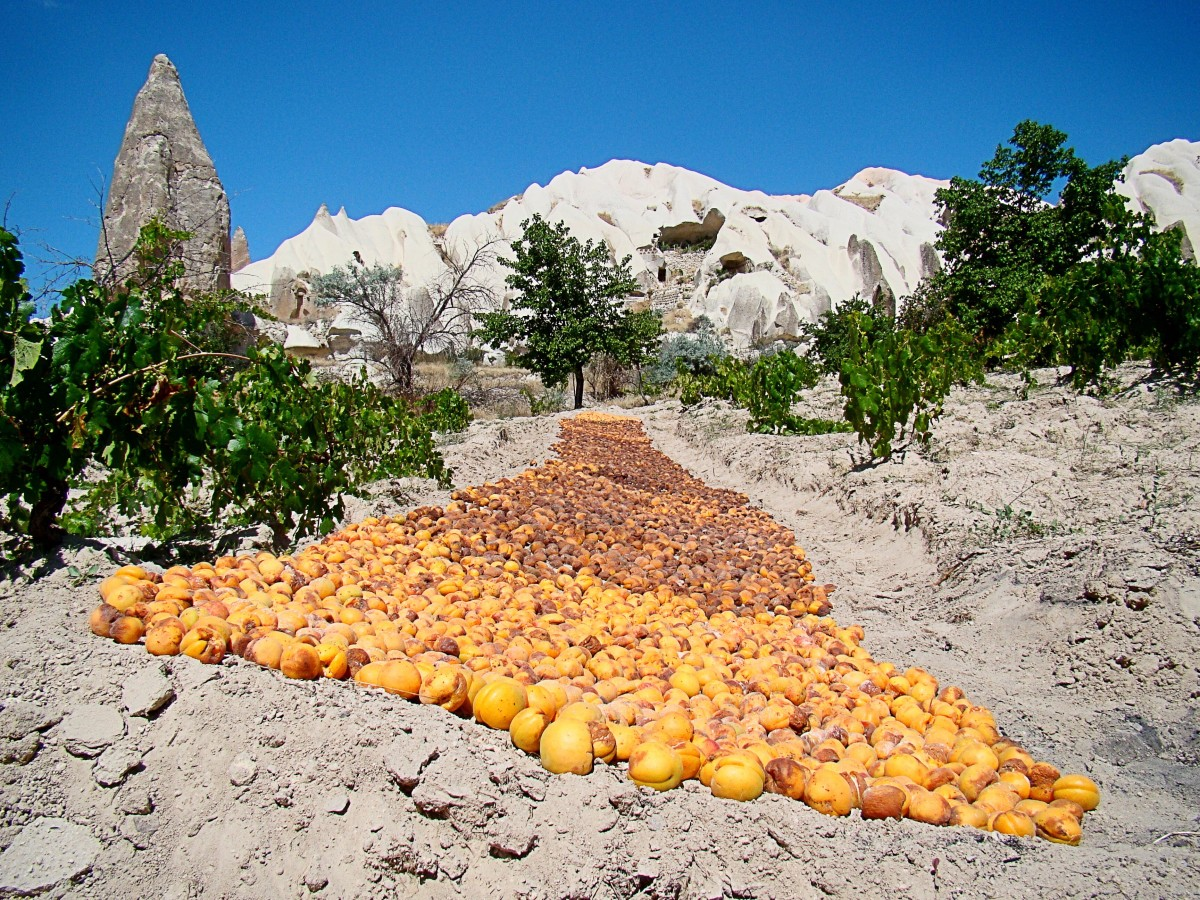Apricots drying in the sun in Cappadocia, Turkey