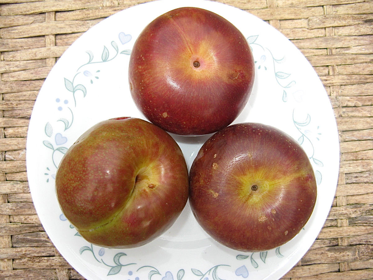 Pluots (plum and apricot hybrids)