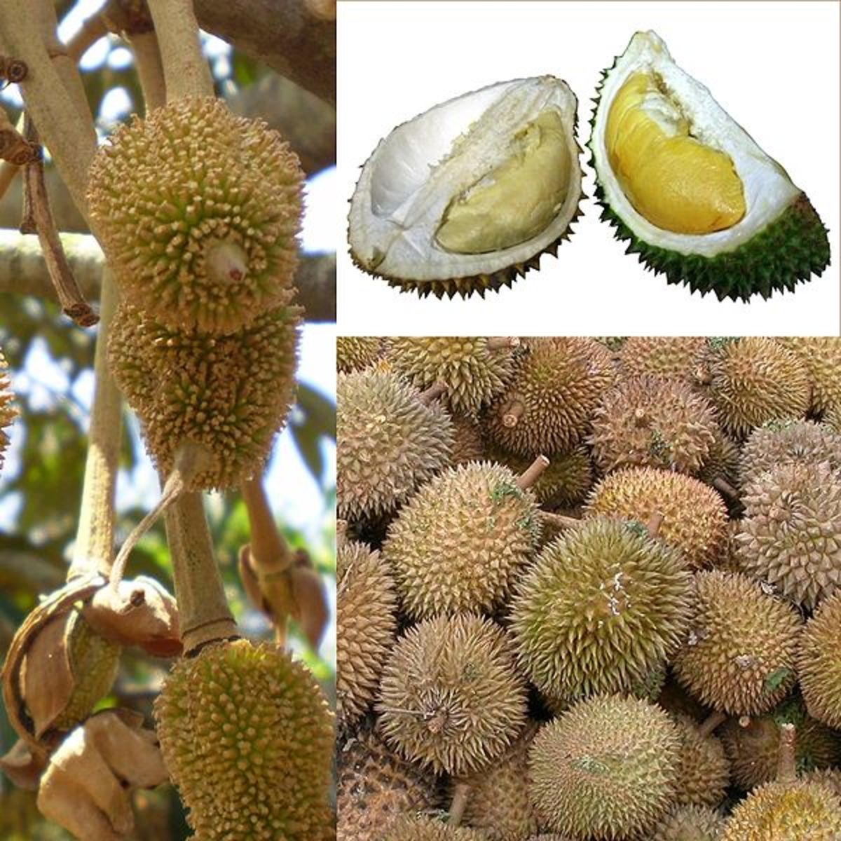 The durian!