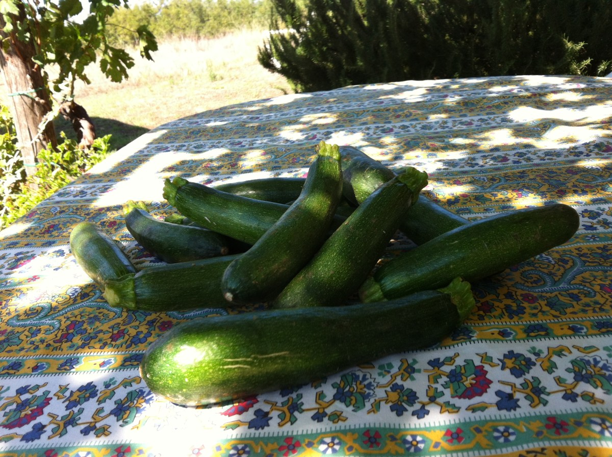 Zucchini  straight from the garden