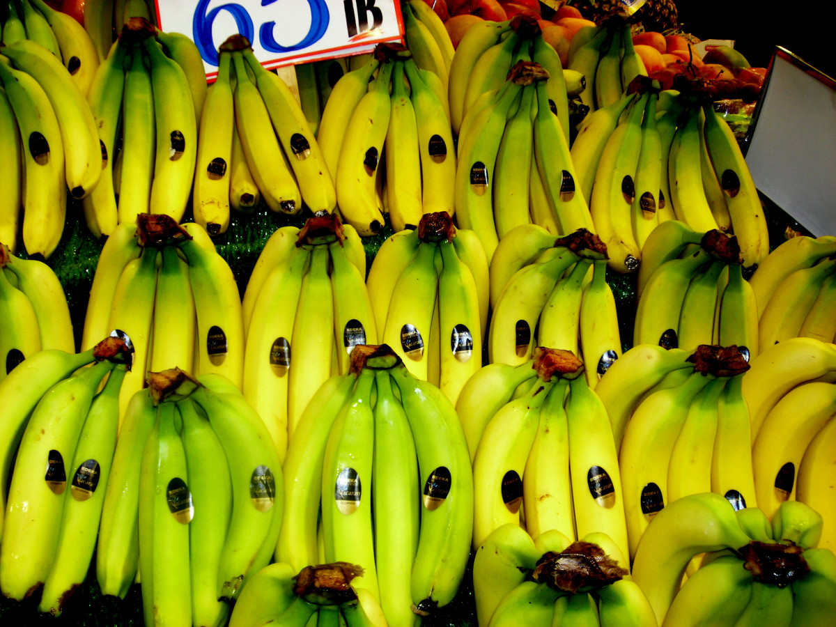 Rows of unripe yellow and green bananas. They are very cheap, just 65p (45c) per lb. (you can just see the price label at the top of the picture).
