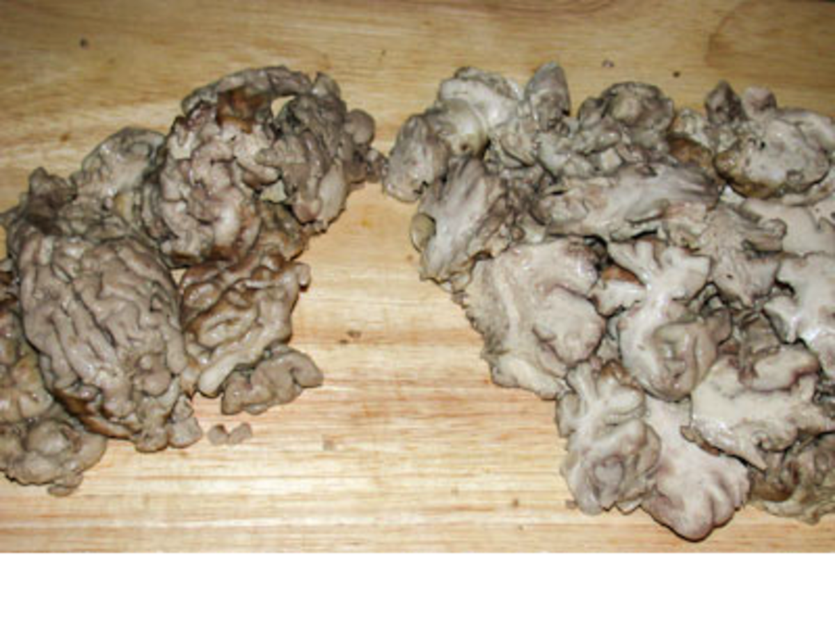 Boiled Beef Brain