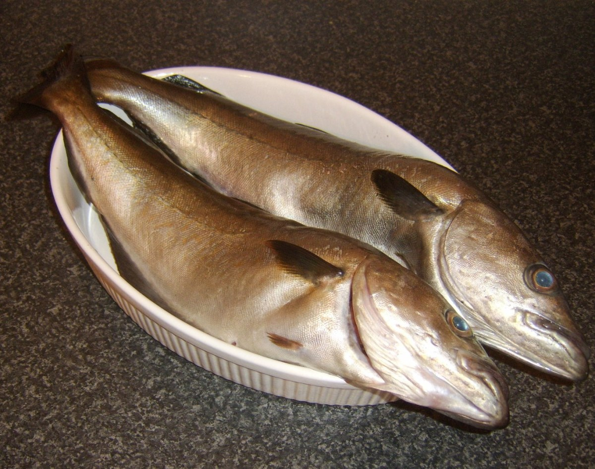 Two fresh pollack ready to be filleted