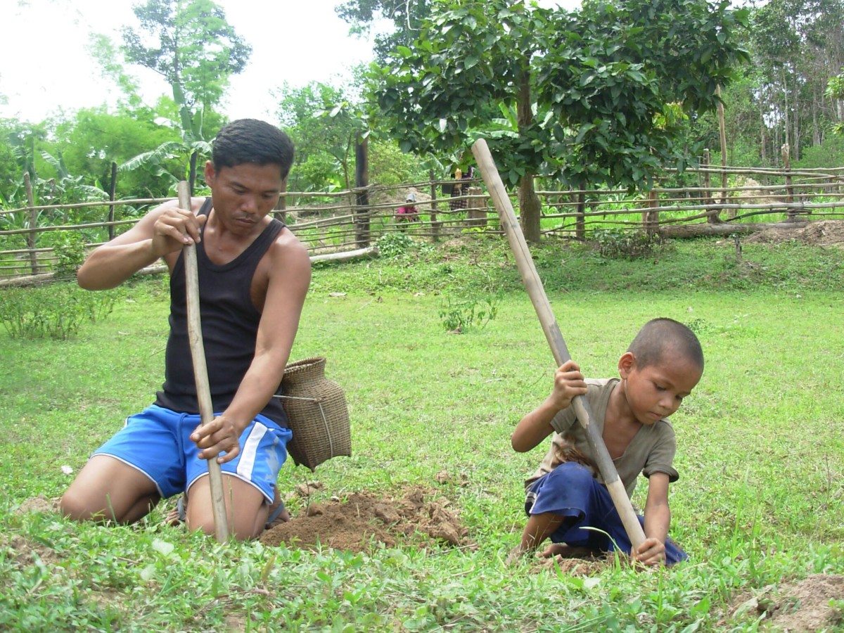 A father and son dig for crickets, a popular food item in Laos