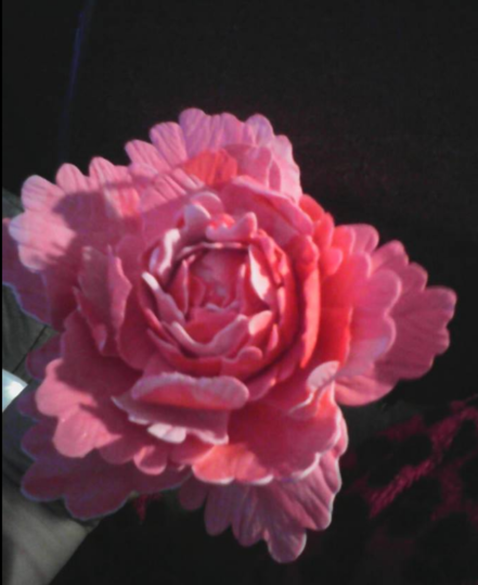 This peony was made using homemade gumpaste.
