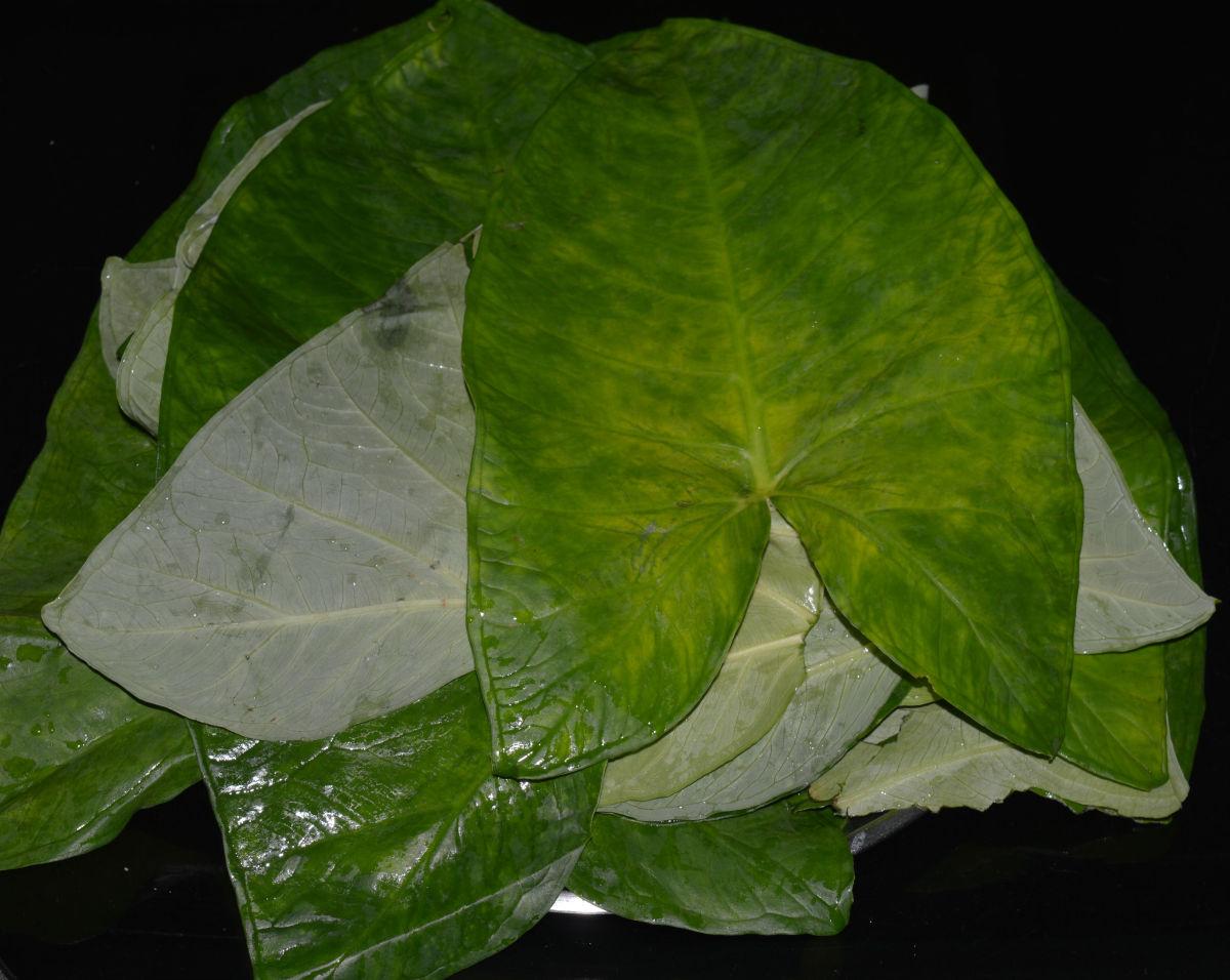 Step one: Wash taro leaves.