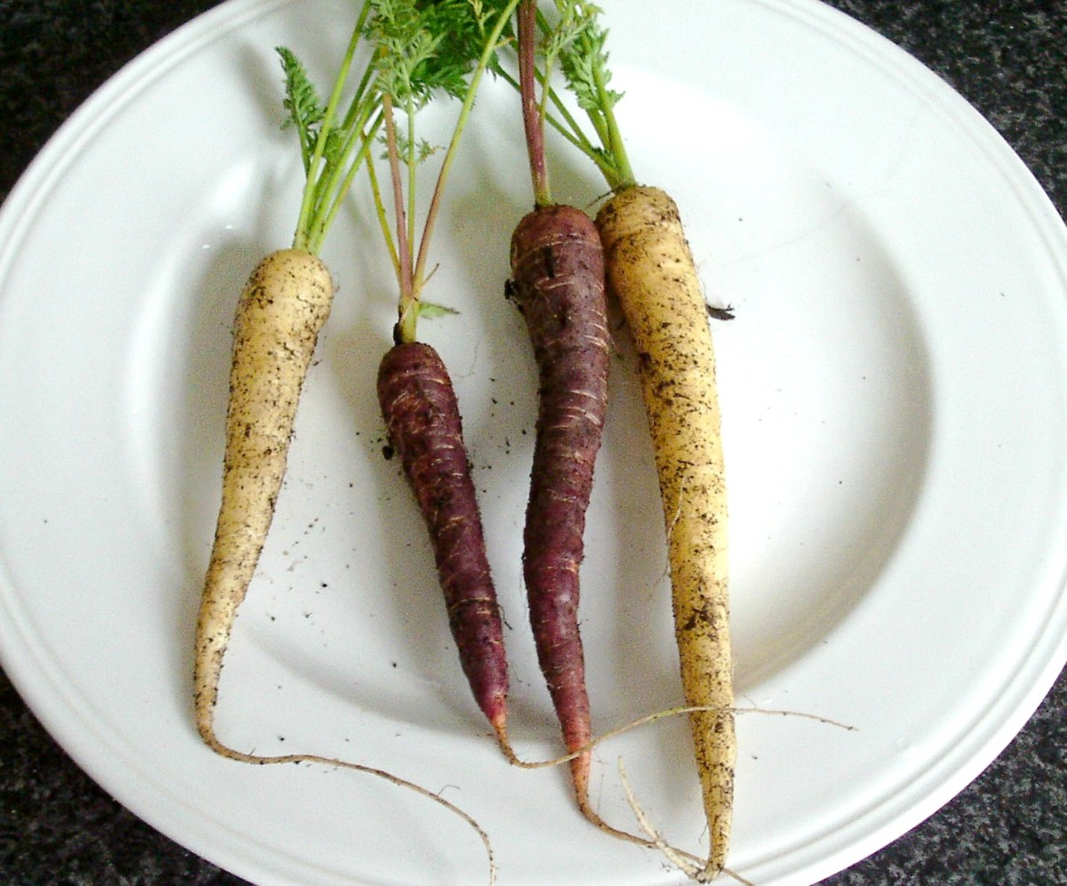 Assorted homegrown heritage carrots