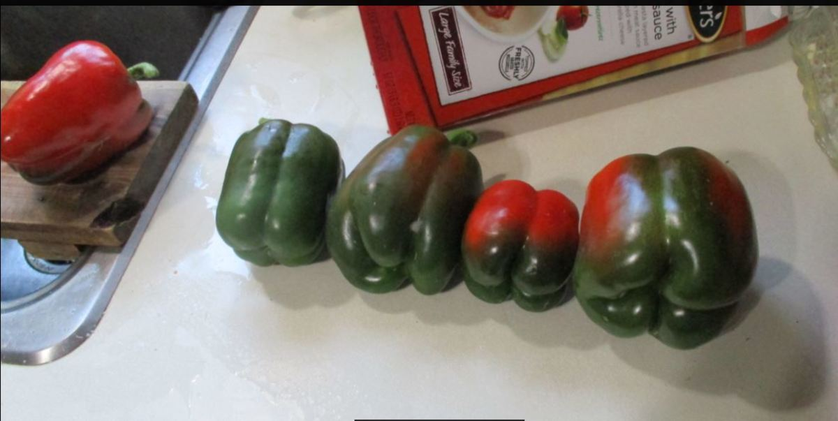 minnesota-cooking-bell-peppers-stuffed-with-frozen-lasagna