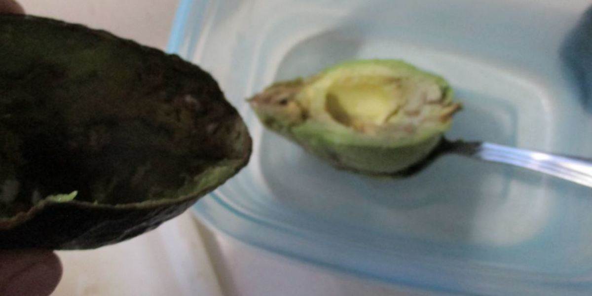 scoop green avocado from outside