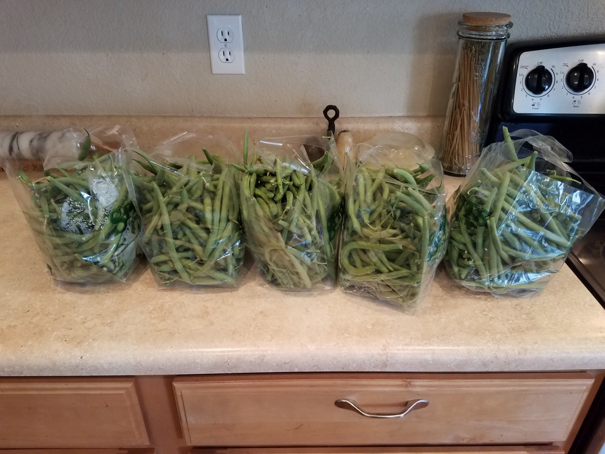 Start with a bunch of fresh green beans. I was able to do three rounds of jars with this many green beans.