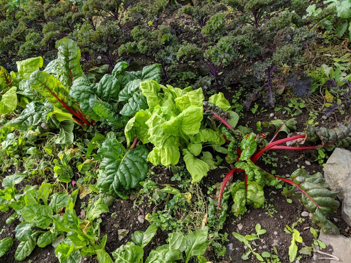Beautiful fresh vegetables at Burtown House.