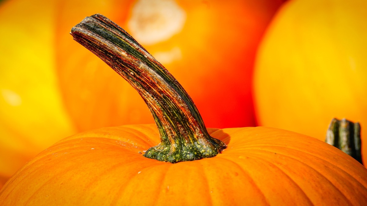 Pumpkins are rich in cancer-fighting beta-carotene and other beneficial nutrients.