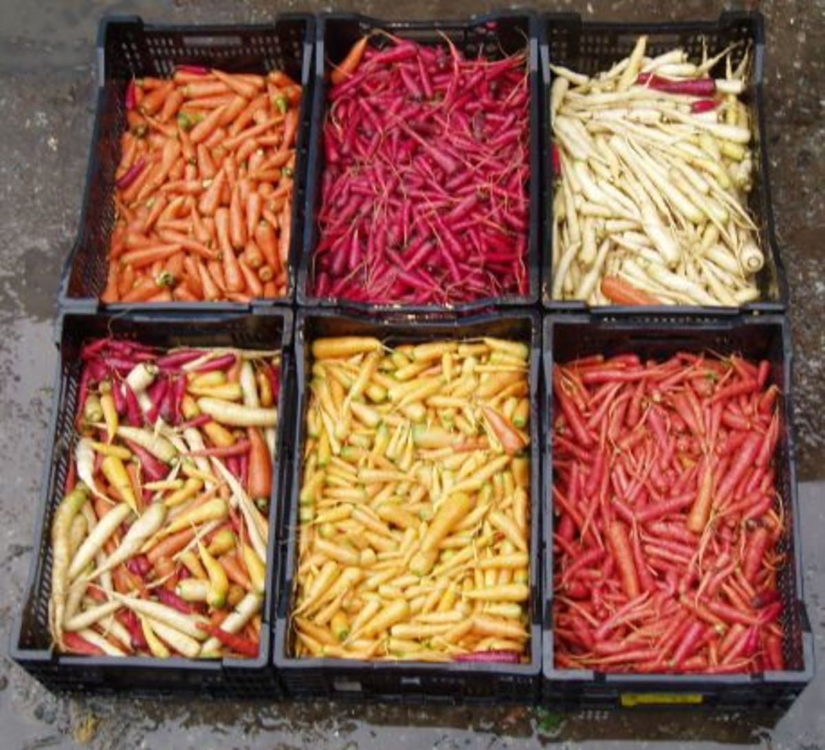 Miniature carrots in different colors